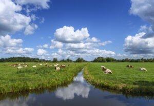 breukelen schenkeldijk polder